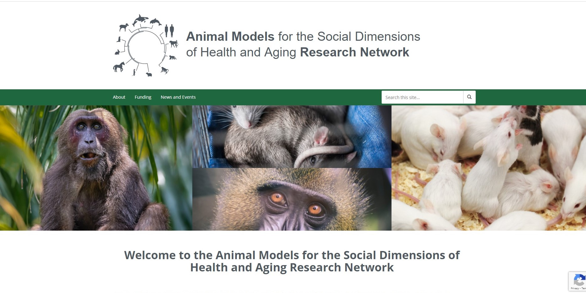 Animal Models Network  Now Accepting 2020-2021 Pilot and Feasibility Project Applications